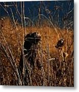 Fencepost And Thistles Metal Print