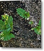Fern And Coquina Metal Print