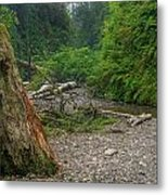 Fern Canyon Trunk Metal Print