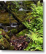 Fern Fallen Log And Stream Metal Print