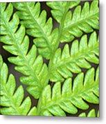 Fern Frond, Detail, Big Island, Hawaii Metal Print