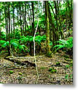 Fern Grove Metal Print