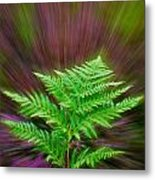 Fern Zoom Metal Print