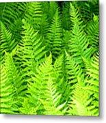 Ferns Galore Filtered Metal Print