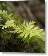 Ferns In Forest Metal Print