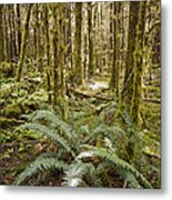 Ferns Sit On The Forest Floor Metal Print