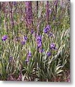 Field Of Bearded Iris Metal Print