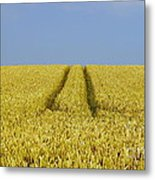Field Of Corn Metal Print