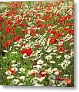 Field Of Daisies And Poppies. Metal Print