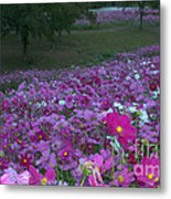 Field Of Flowers Along The Highway  Metal Print