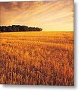 Field Of Grain Stubble Near St Metal Print