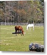 Field Of Horses Metal Print