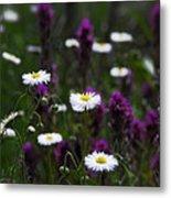 Field Of Spring Flowers Metal Print