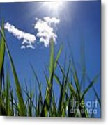 Field Of Wheat In Limagne. Auvergne. France. Europe Metal Print