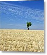 Field Of Wheat In Provence Metal Print
