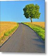 Field Path With Walnut Tree Metal Print