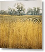 Fields At The Lillian Annette Rowe Bird Metal Print