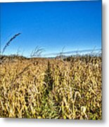Fields Of Gold Metal Print by Dan Crosby