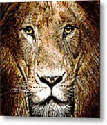 Fiercely Captivating Metal Print