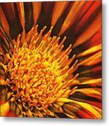 Fiery Passion Metal Print