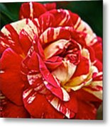 Fiesta Rose Metal Print