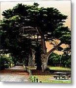 Fig Tree Lane Metal Print