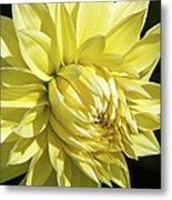 Figaro Yellow Dahlia Metal Print