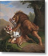 Fight Of A Lion With A Tige Metal Print