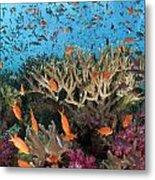 Fiji Reef Riot Metal Print