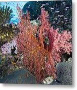 Fiji Sea Fan Scenic Metal Print