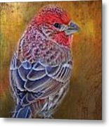 Finch With Gold Texture Metal Print