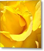 Fine Art Prints Yellow Rose Flower Metal Print