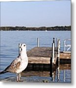 Finger Lake Gull Metal Print