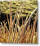 Fingers Of Frost Metal Print