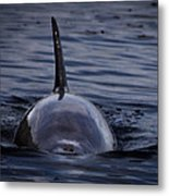 Fins Up Metal Print