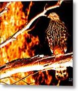 Fire Hawk 0112 Metal Print