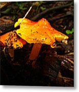 Fire In The Forest - Hygrocybe Cuspidata Metal Print