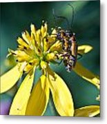 Firefly Fornication Metal Print