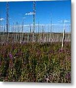 Fireweed  Epilobium Angustifolium Glacier National Park Usa -2 Metal Print