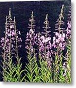Fireweed Flowers Metal Print