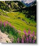 Fireweed In Henson Creek Drainage Metal Print