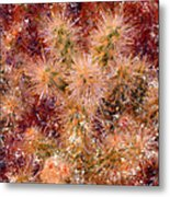 Fireworks Explosion Metal Print by Marilyn Sholin