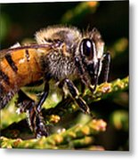 First Bee For The Summer Metal Print