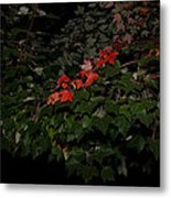First Fall Colors At Night Metal Print