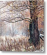 First Snow. Old Tree Metal Print by Jenny Rainbow