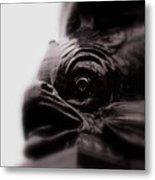 Fish Eye Metal Print by Jacqui Collett