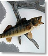 Fish Mount Set 02 Bb Metal Print