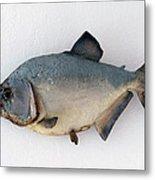 Fish Mount Set 04 A Metal Print