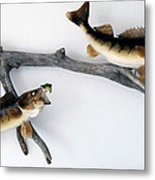 Fish Mount Set 06 A Metal Print