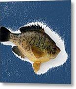 Fish Mount Set 08 C Metal Print
